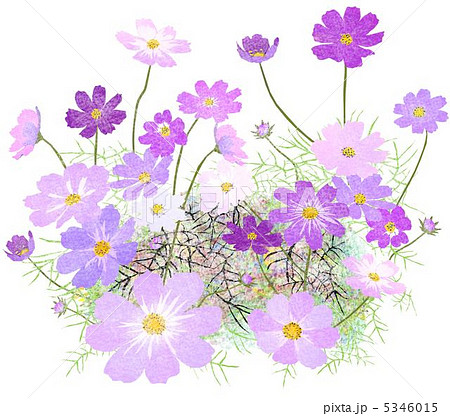 10月の花のイラスト素材