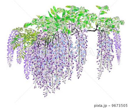 5月の花 はがき絵の写真素材 Pixta
