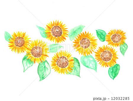 ヒマワリ ひまわり 向日葵 植物 真夏 夏 夏の風物詩 花 黄色 元気 満開 緑の葉