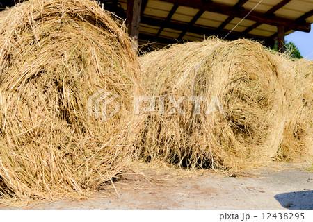 稲わらロールの写真素材 - PIXTA