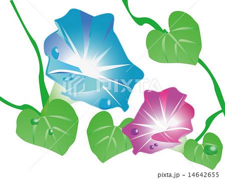 7月の花のイラスト素材 Pixta