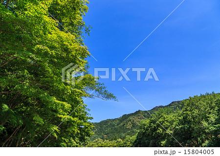 本宮山県立自然公園