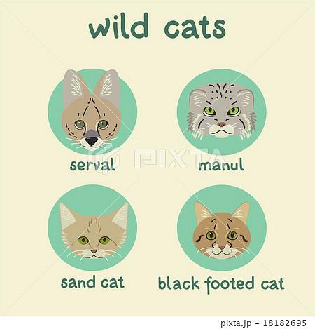 動物 マヌルネコ ネコ 野生のイラスト素材 Pixta