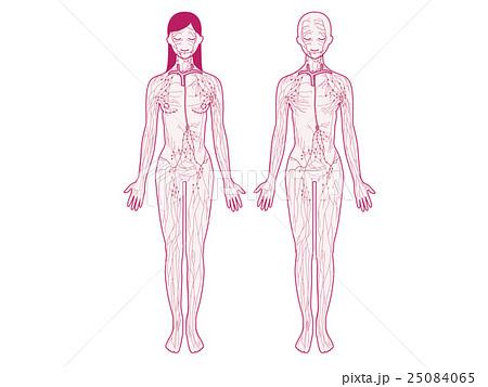 右鎖骨下静脈のイラスト素材 Pixta