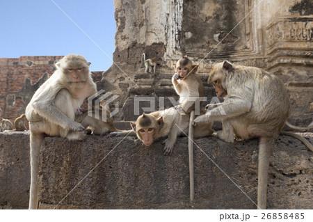 猿の惑星の写真素材 Pixta