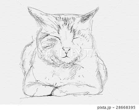 猫 ペン画 線画 ラフ画のイラスト素材 Pixta
