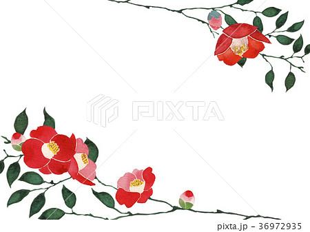 正月 花 寒椿のイラスト素材 Pixta