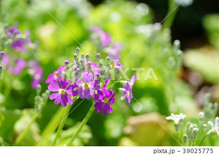 春暖の写真素材 - PIXTA
