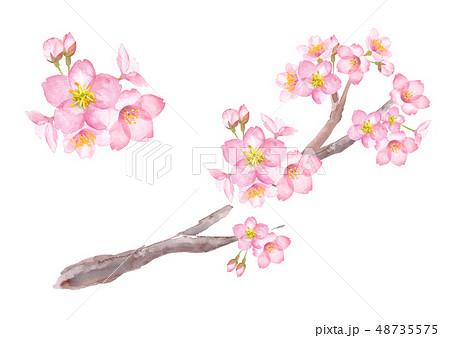 儚い 花のイラスト素材 Pixta